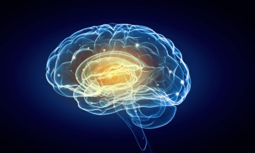 Concussions And Neuroplasticity